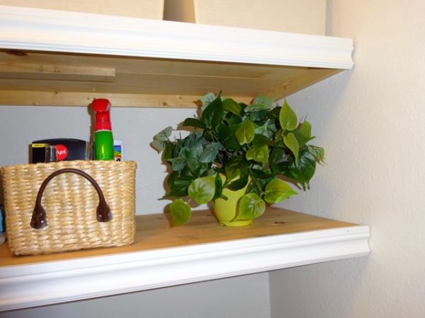 Plant in laundry room