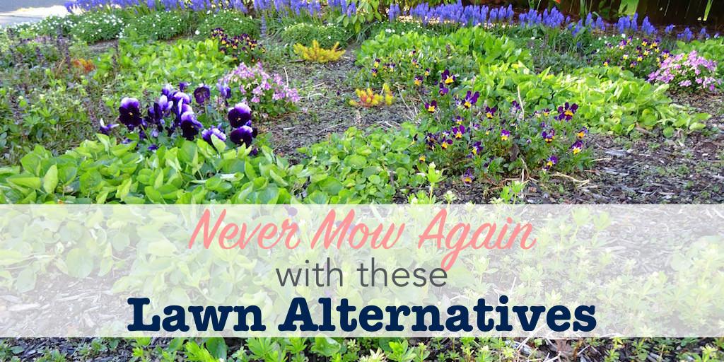 No mow lawn alternatives