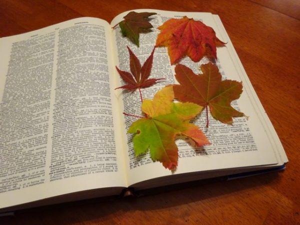 Press leaves in a book