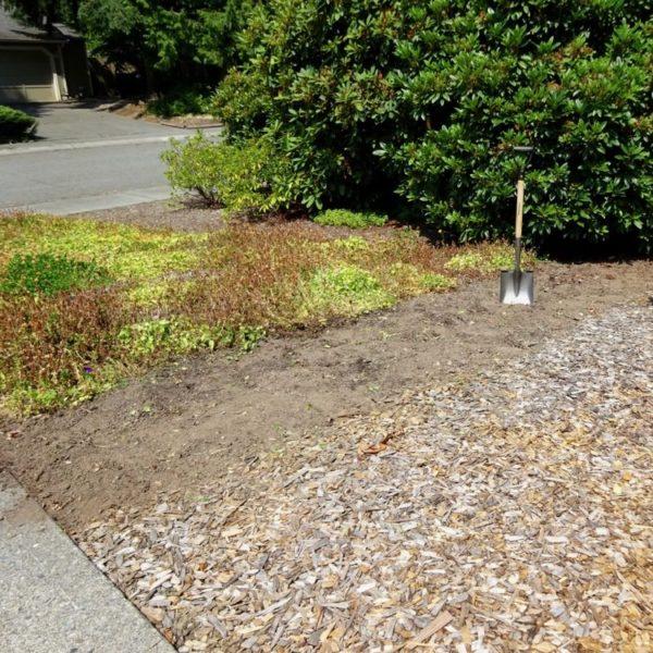 Creating a no-water yard
