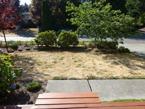 Dead lawn needs to be replaced