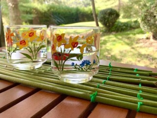 coasters made from hosta stems
