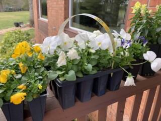 multi-packs of small flowers