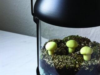 diy moss terrarium in IKEA lantern