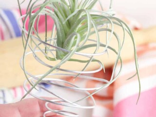 diy air plant holder from wire
